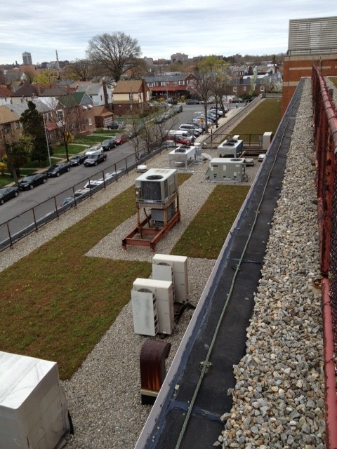 This section of the green roof is carefully placed around mechanical equipment.